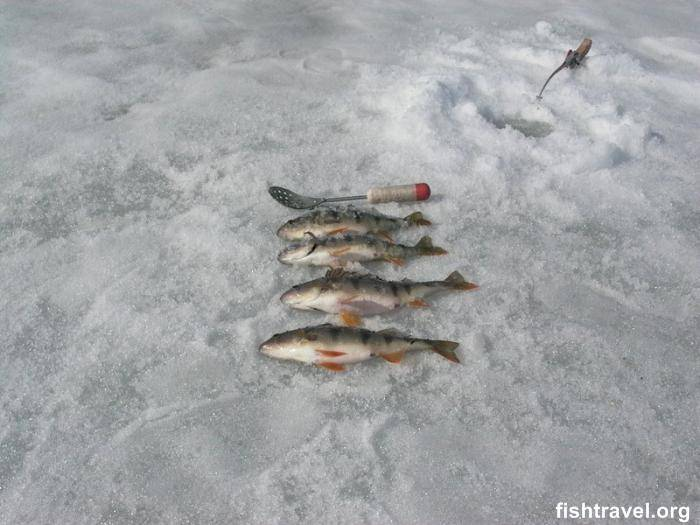 Рыбалка в пермском крае: обзор и рекомендации лучших мест