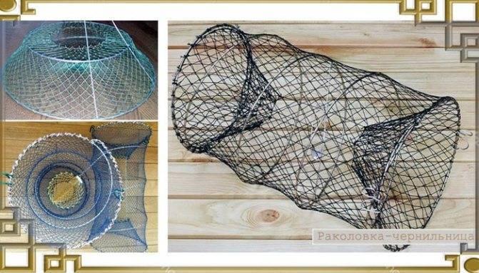 Интересно о раках - как и где живут, как ловить и как хранить – рыбалке.нет