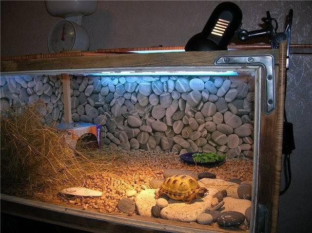 Террариум для сухопутной черепахи: выбор, требования, обустройство
