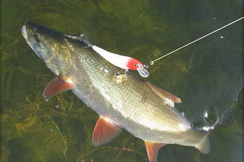 Рыбалка на волге весной