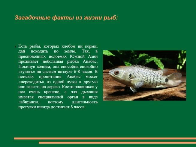 Польза рыбок гарра руфа или рыбы доктора: содержание и разведение в домашних условиях