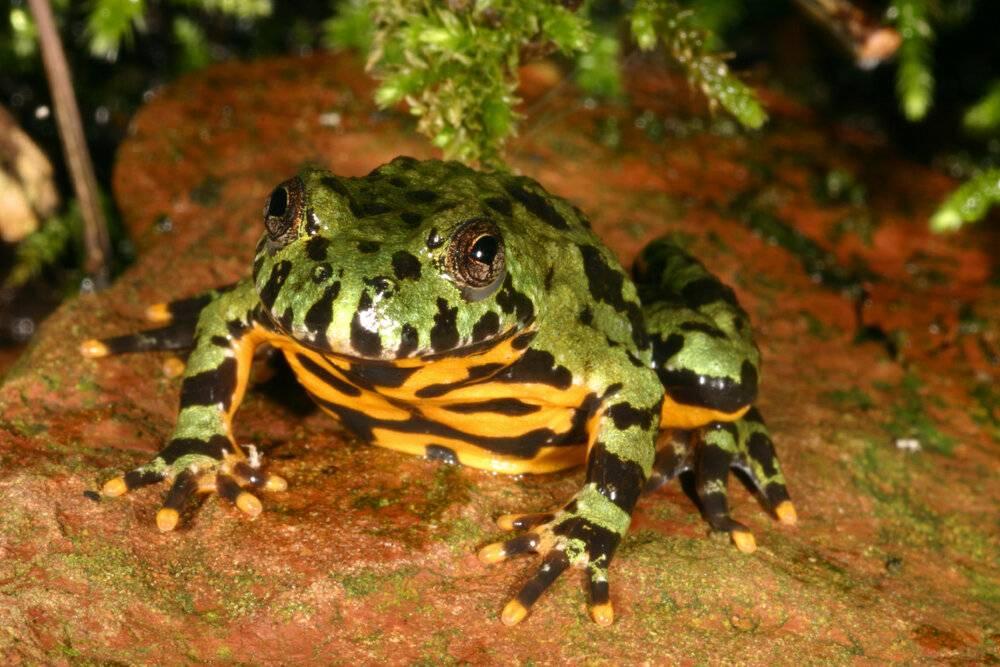 Чем питается лягушка в природе и в домашних условиях? :: syl.ru