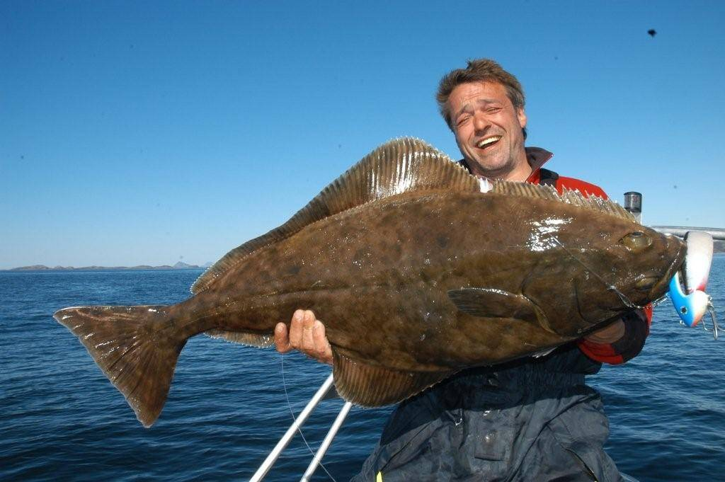 Палтус стрелозубый - описание, среда обитания, промысел, рыбалка на палтуса, рецепты