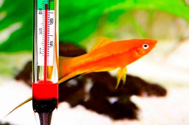 Температура воды в аквариуме для рыбок и растений: какая должна быть, оптимальный, минимальный и максимальный диапазон, как понизить летом и поднять зимой