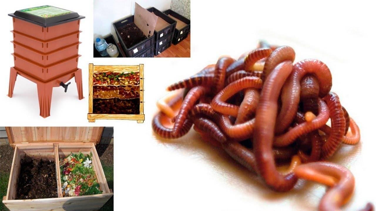 Как разводить червей в домашних условиях для рыбалки - навозные, дождевые, мучные