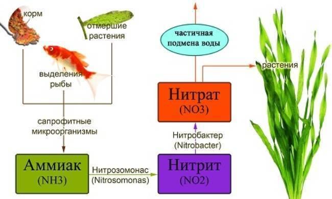 Показатель ph воды, жёсткость воды аквариума