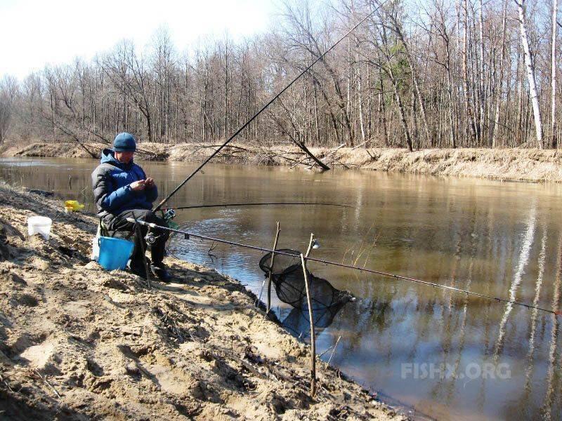 Ловля карпа весной: прикормки, приманки и особенности рыбалки