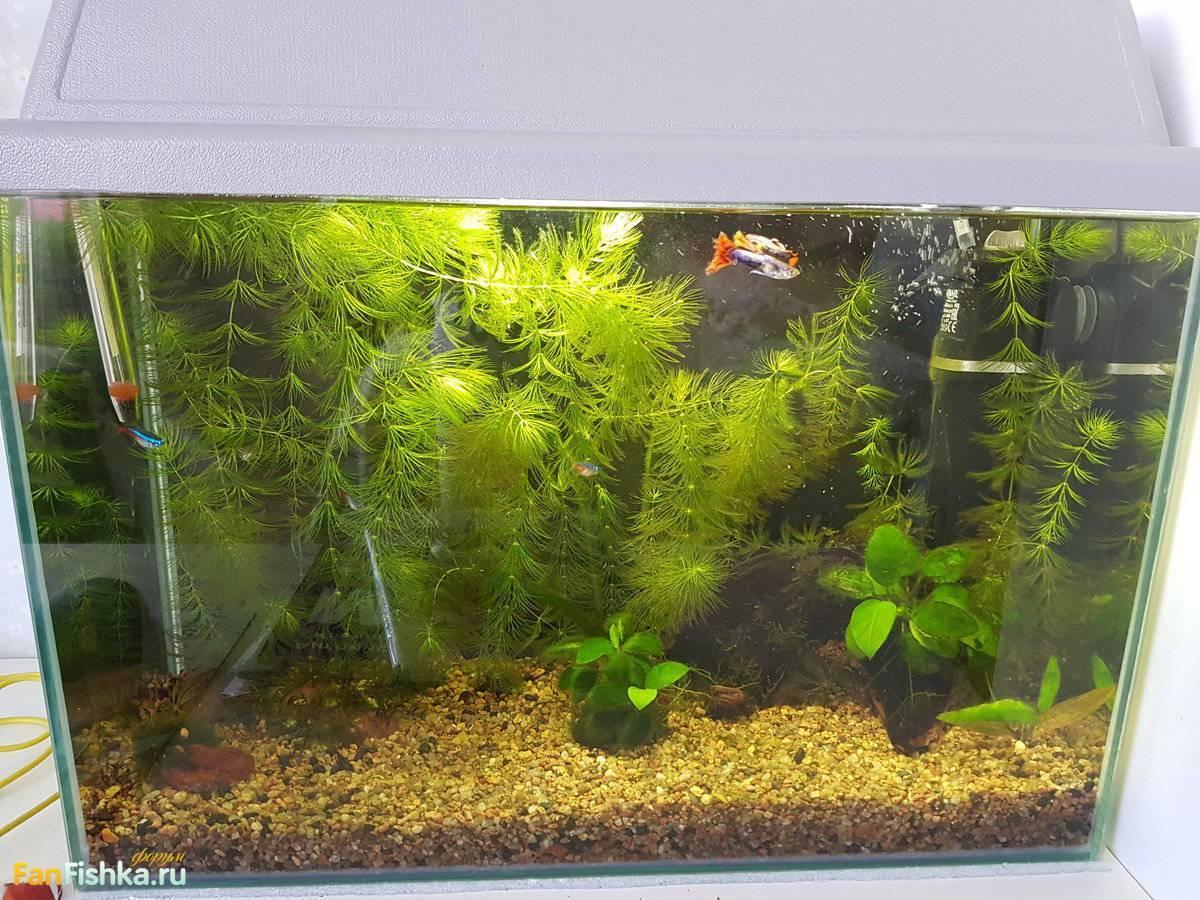 Сколько времени нужно отстаивать воду для аквариума