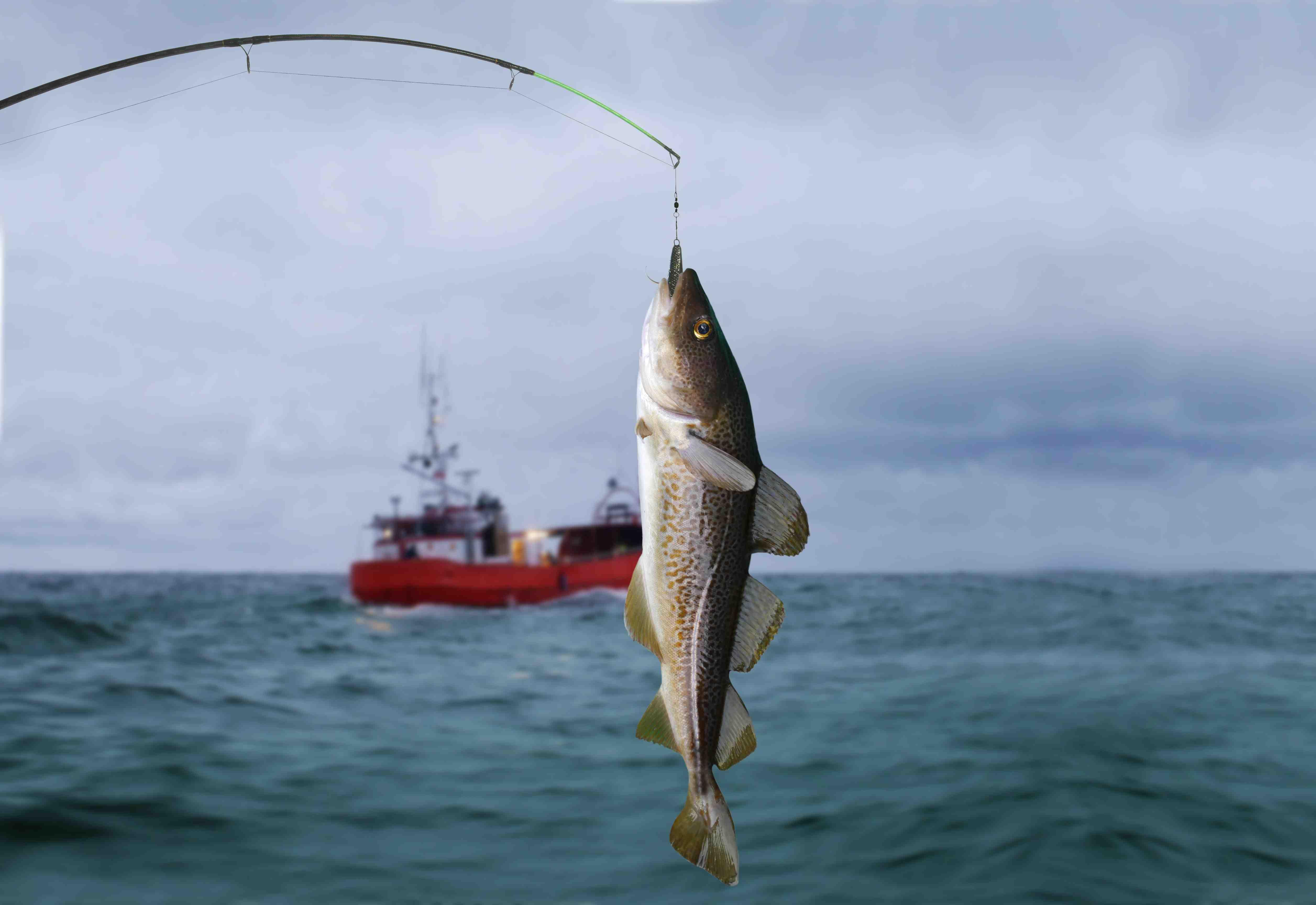 Рыбы, обитающие в баренцевом море