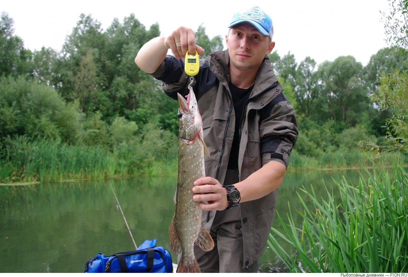 Лучшие места для рыбалки в рязанской области