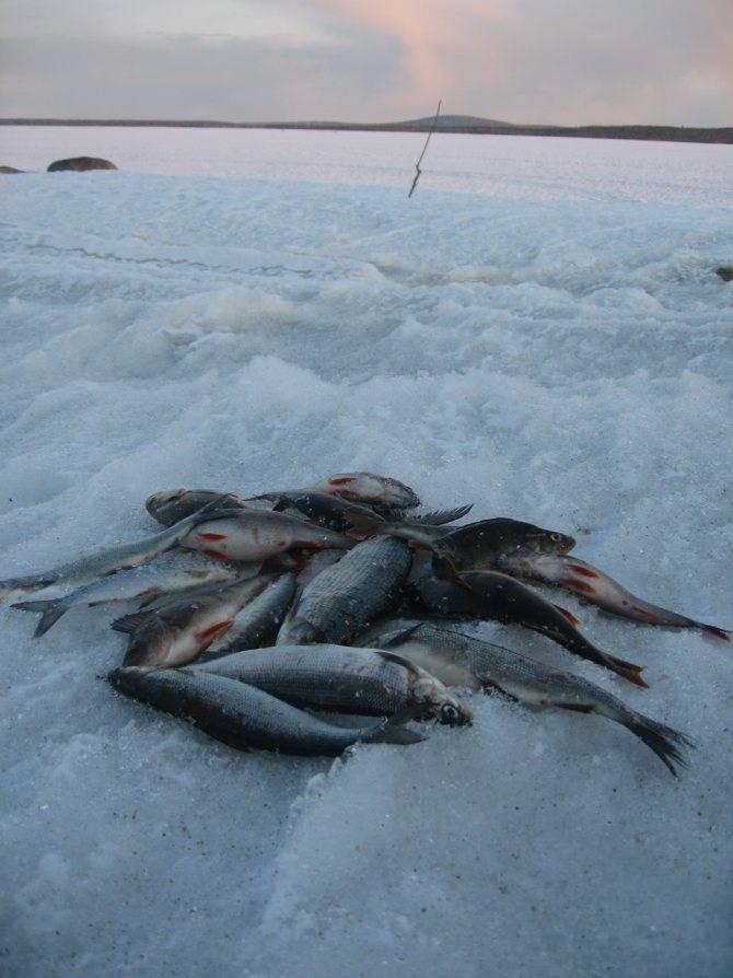 Сообщества › Охота и Рыбалка › Блог › Кольский п-ов, оз. Имандра
