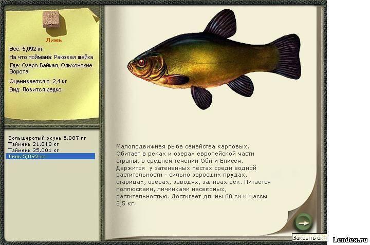Как ловить тайменя в Сибири