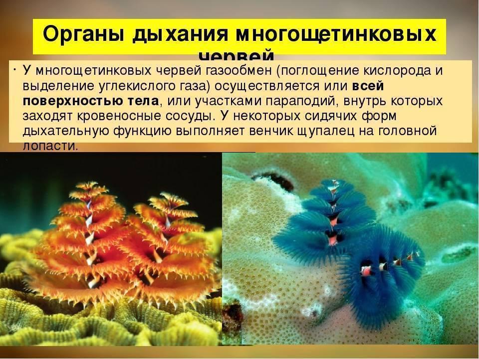 Как избавиться от червей в цветочных горшках: обзор эффективных методик