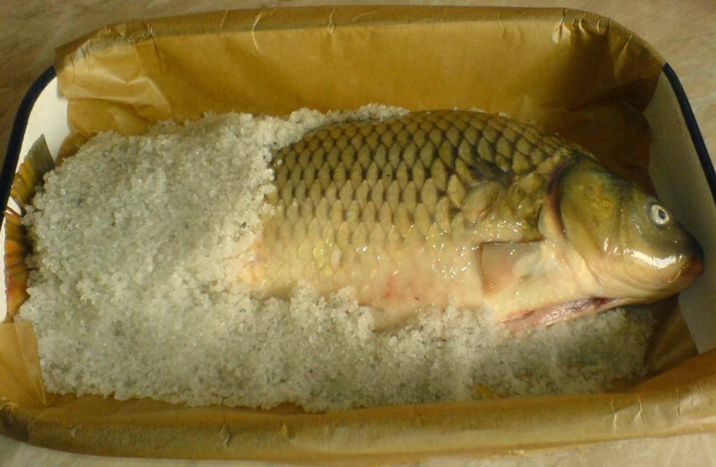 Польза сома: вред, состав, калорийность и особенности приготовления полезной рыбы (125 фото и видео)
