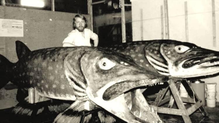 Самый большой окунь, пойманный в россии и в мире, его вес