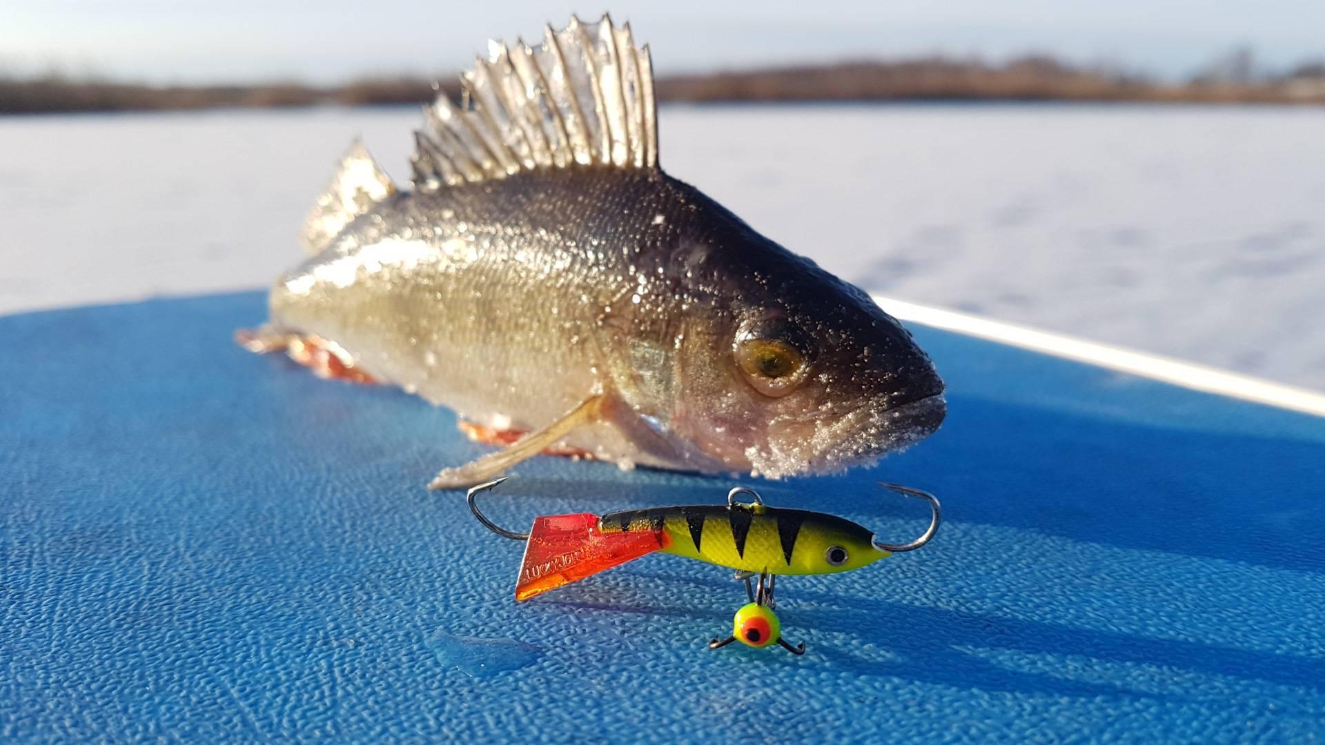 Мандула: важные детали. часть 2 - статьи о рыбалке