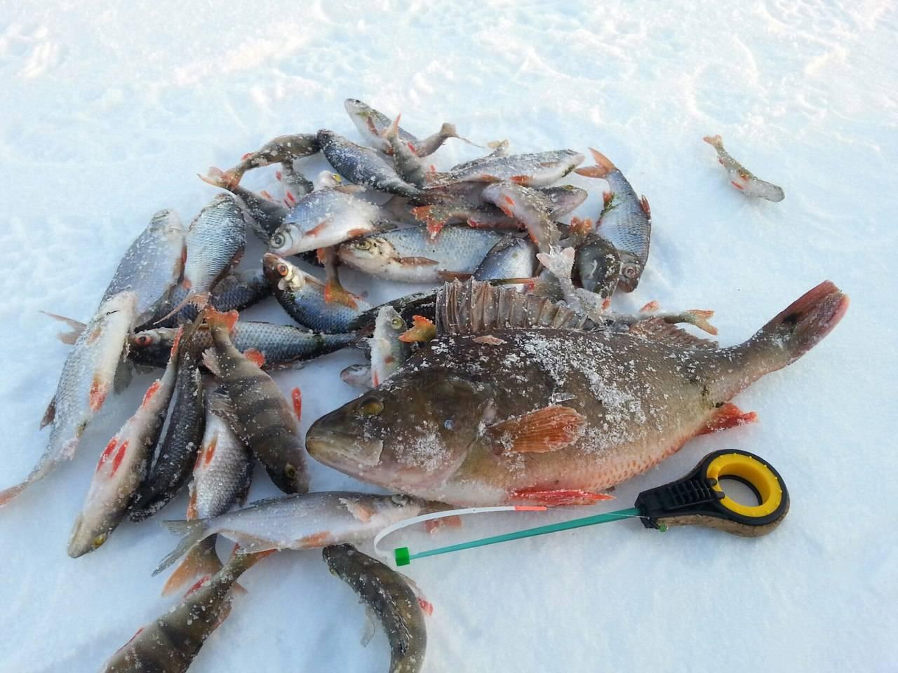 Места рыбалки в чувашии | где найти рыбу в солнечном крае