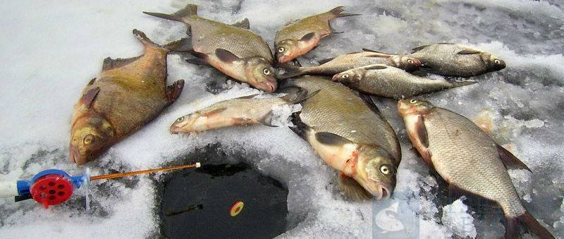 Как ловить леща зимой: различные монтажи оснастки, прикормка для подлёдной рыбалки