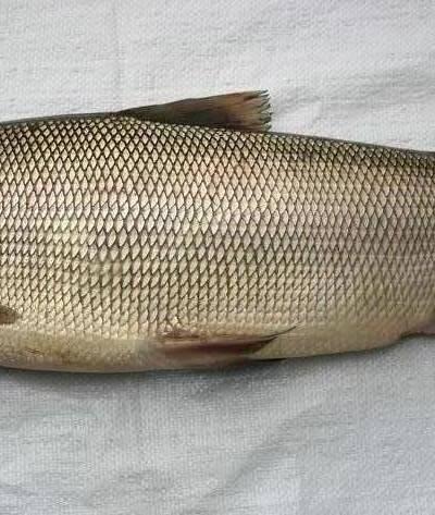 Байкальский омуль (описание, рыбалка, рецепты, легенда)