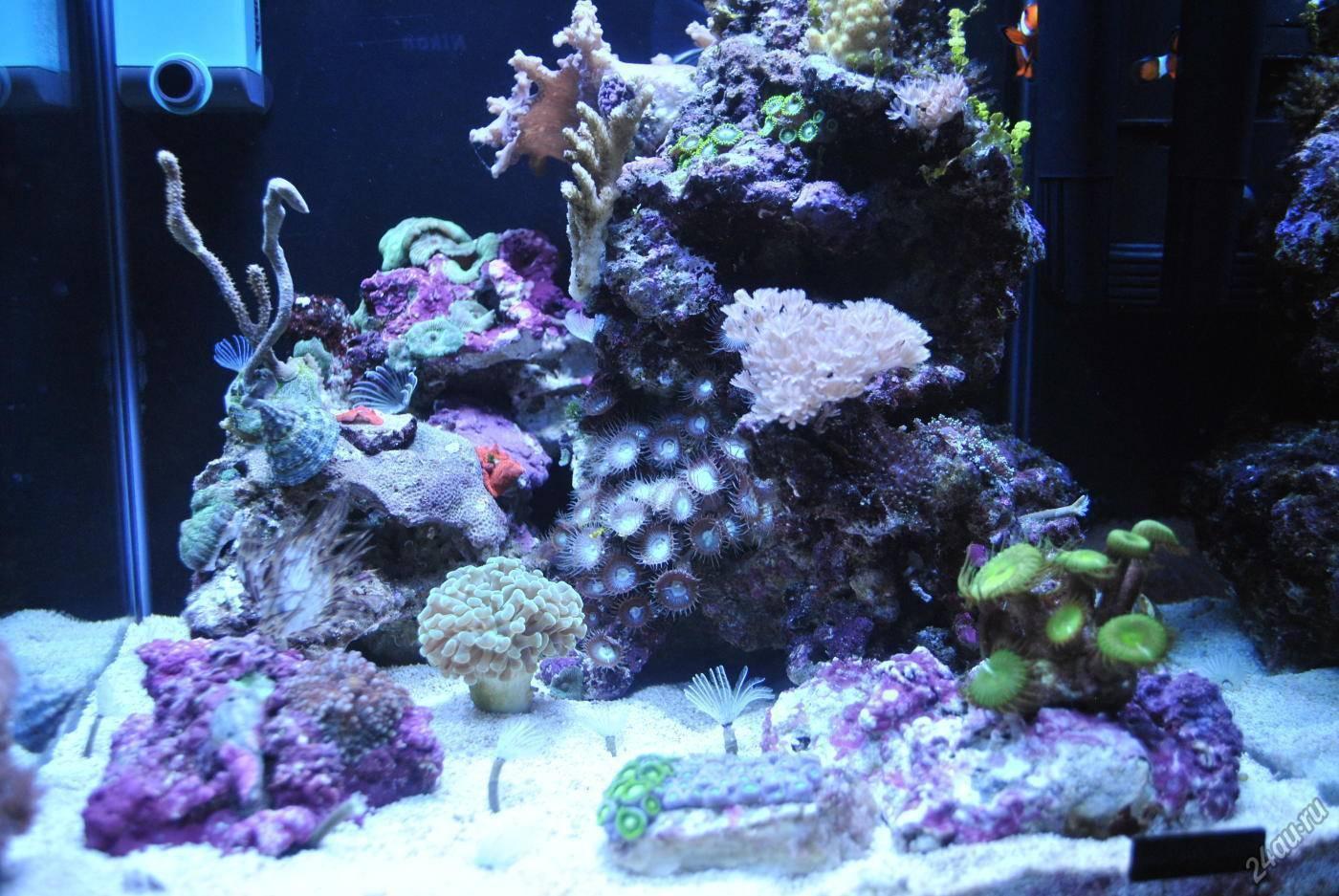 Как сделать морскую воду для аквариума?