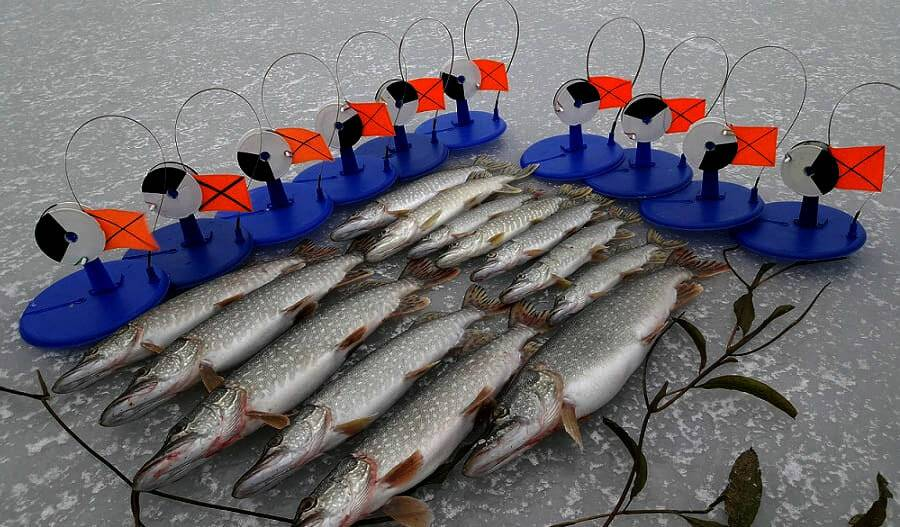Запрет на рыбалку 2020