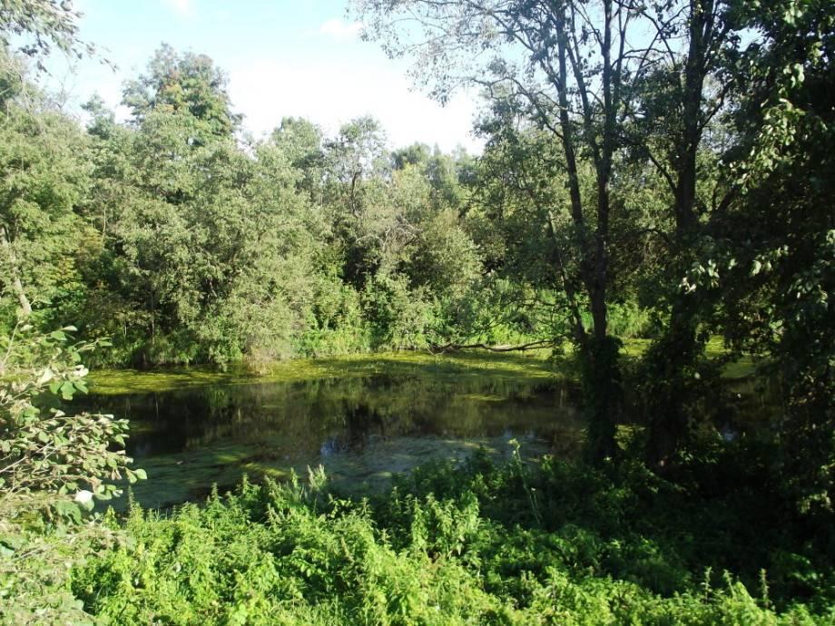 Река маглуша, населённые пункты на маглуше, название, описание, данные водного реестра