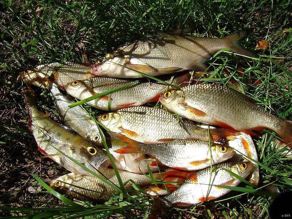 Рыбалка в карелии: рыболовные места, особенности и рекомендации