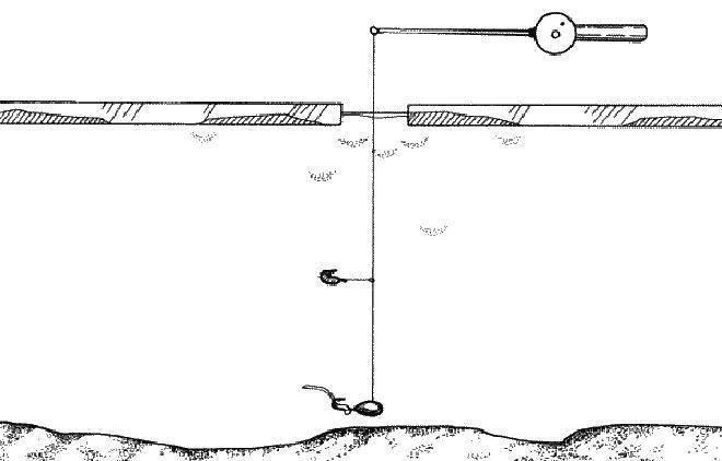 Ловля корюшки на финском заливе: особенности, снасти, советы