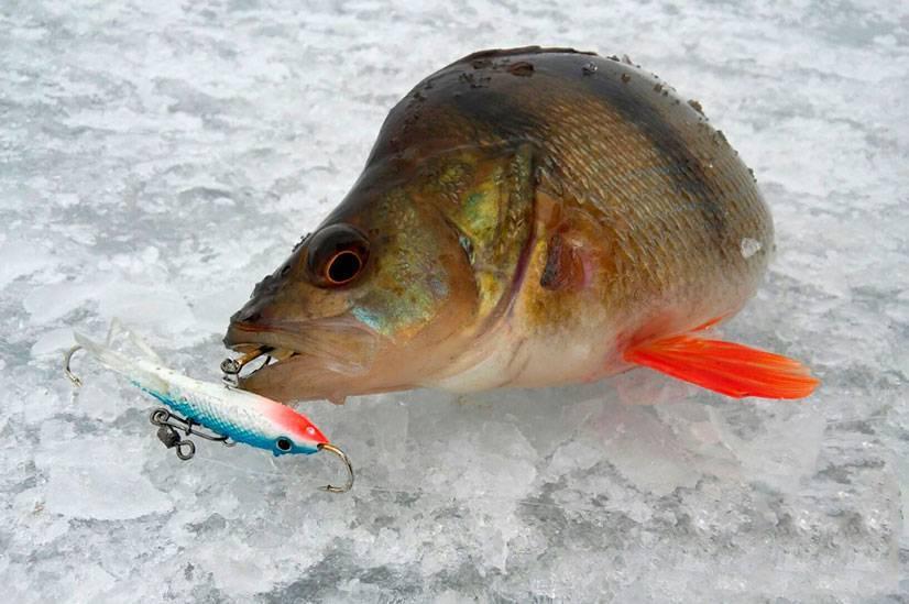 Ловля окуня по первому льду на мормышку: секреты ловли
