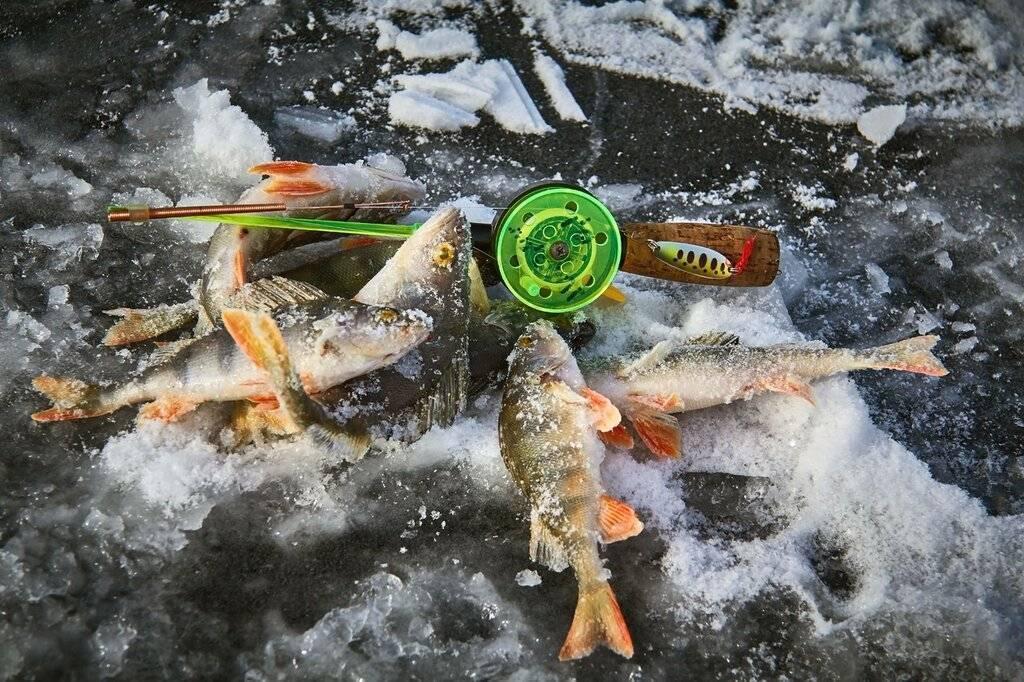 Прогноз клева рыбы в алтайском крае – алтайский край и республика алтай, прогноз клёва. узнайте, куда ехать на рыбалку.