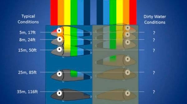Зрение рыб. максимальное расстояние   схема угла зрения