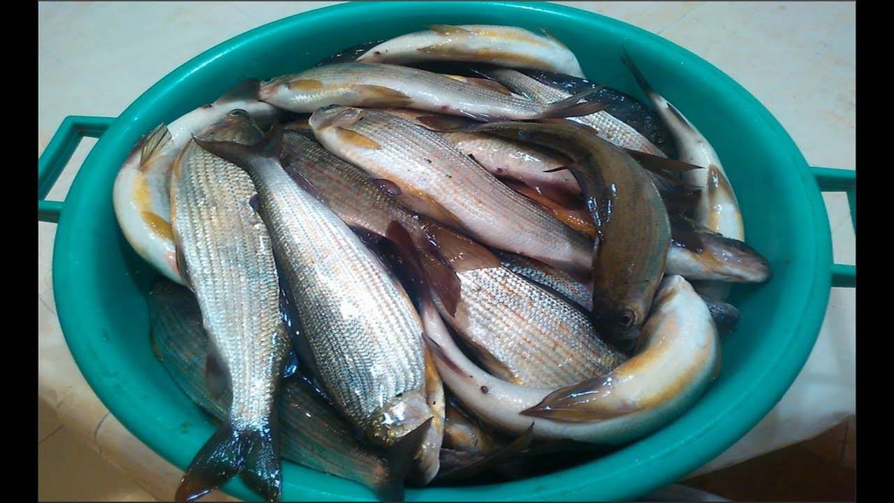 Как приготовить хариуса - рецепты от настоящих рыбаков