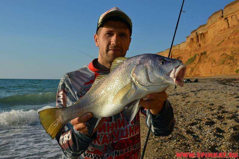 Как поймать рыбу луфарь (гумбар - bluefish) в средиземном море, где и на что ее ловить в израиле | все о рыбалке в израиле