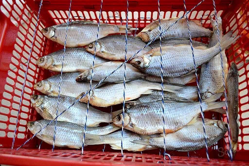 Как правильно засолить рыбу