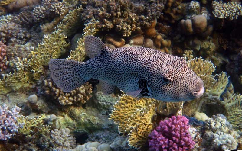 Рыбы красного моря: фото, названия опасных и ядовитых рыб
