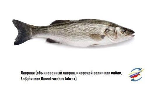 Сибас