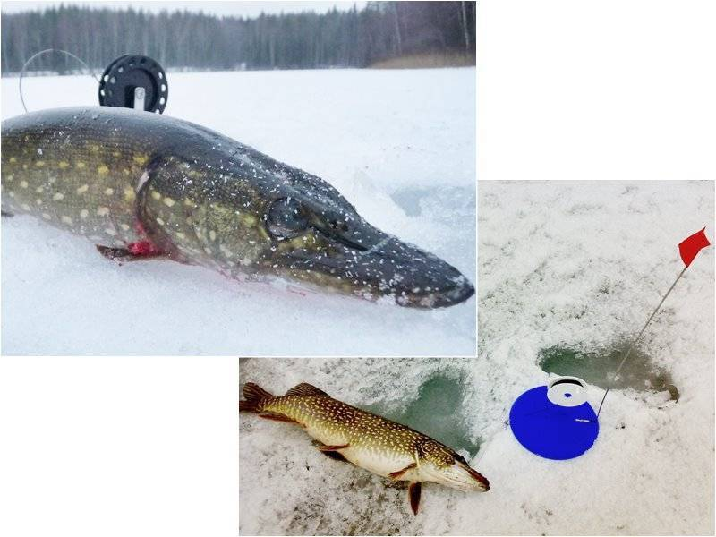 Как производится рыбалка нажерлицы попервому льду?