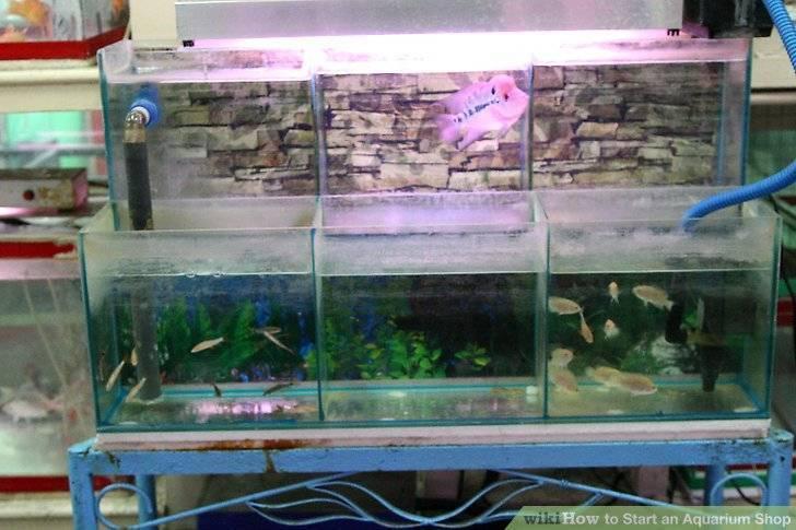 Живой корм для аквариумных рыбок своими руками в домашних условиях. правила хранения пищи в доме: техника кормления рыб в аквариуме