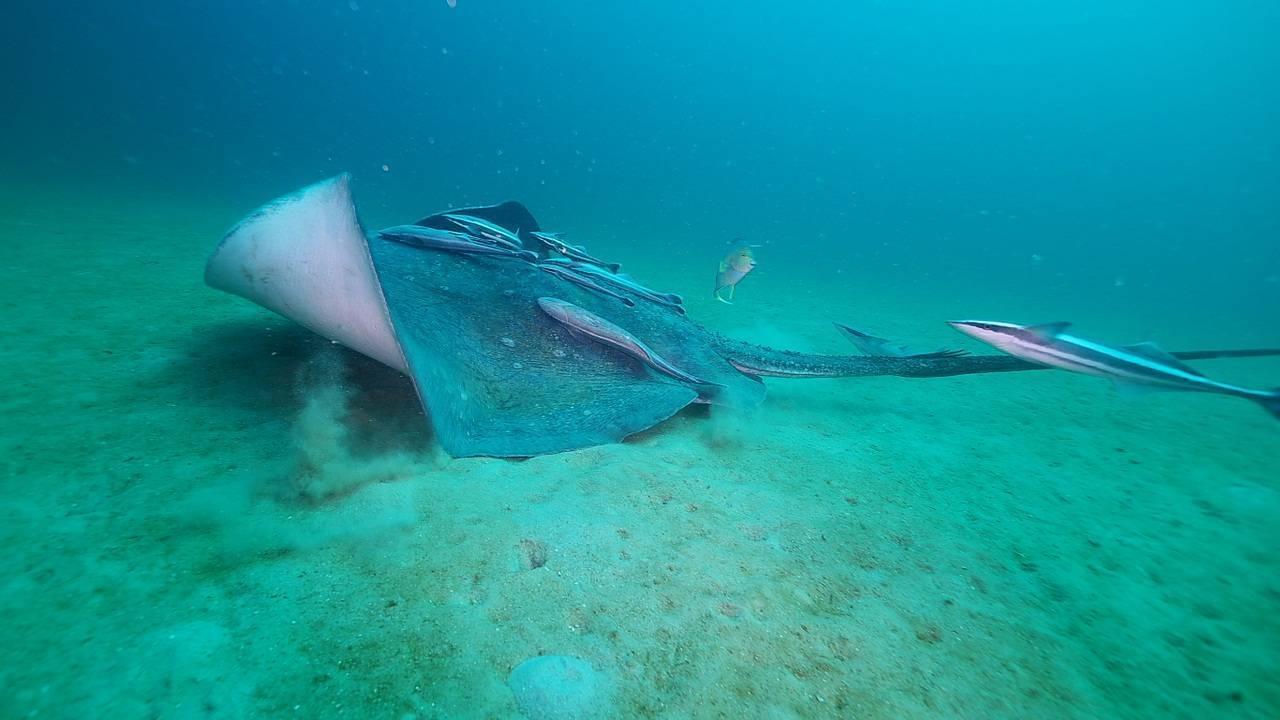 Черное море крыма, опасная фауна - xtreamfory