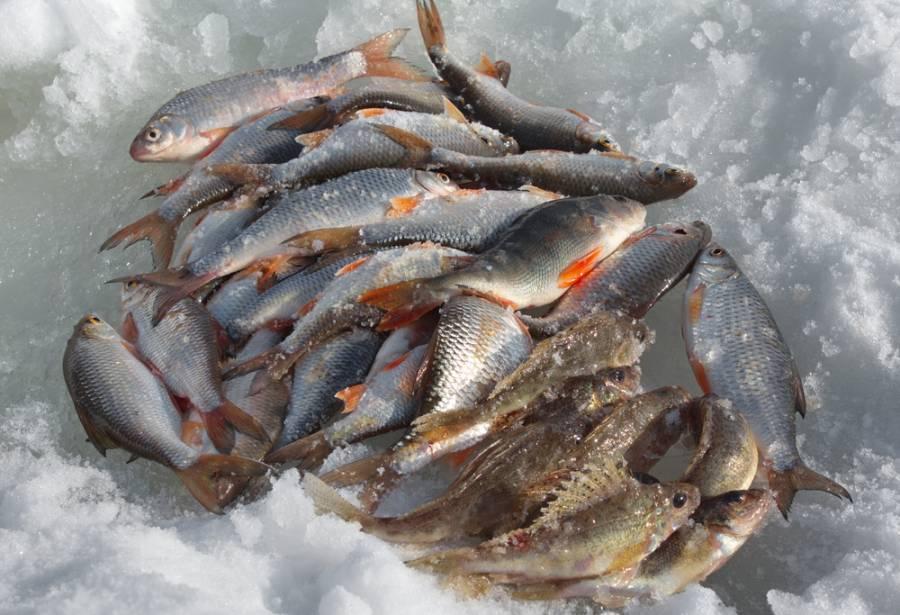 Какая рыба в реке чулым