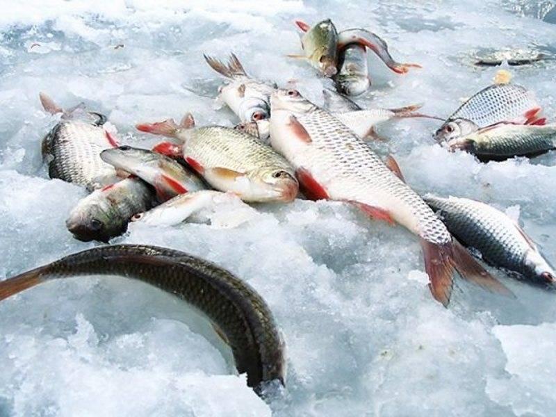 Рыбалка на тайменя