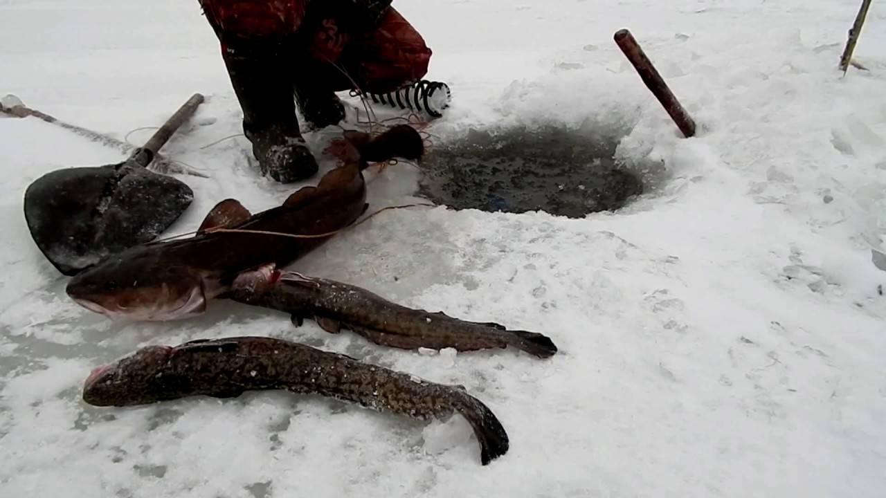 Рыбалка в красноярском крае на налима