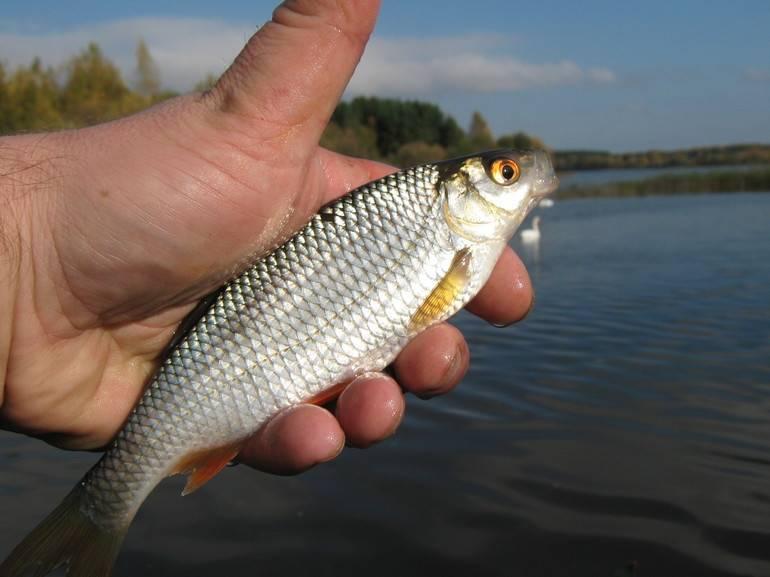 Рыба хамса польза и вред в использовании