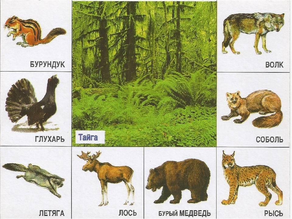 Тайга и таежные леса