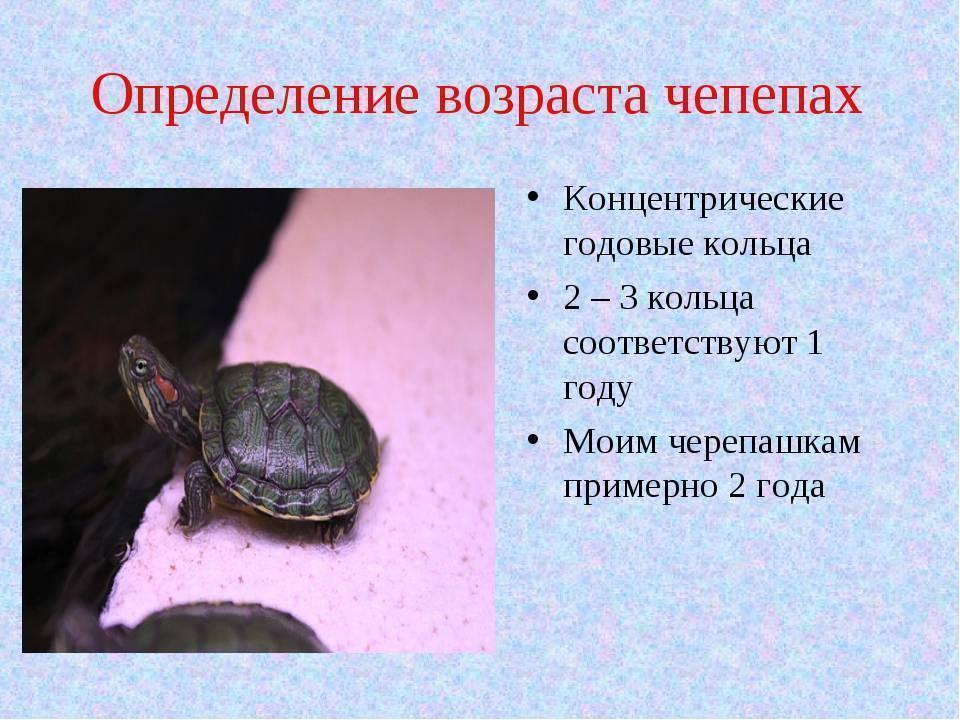 Как определить возраст черепахи и пол: сухопутной, красноухой и т.д.?