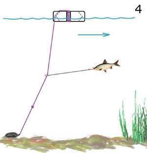 Ловля крупного карася — секреты удачной рыбалки
