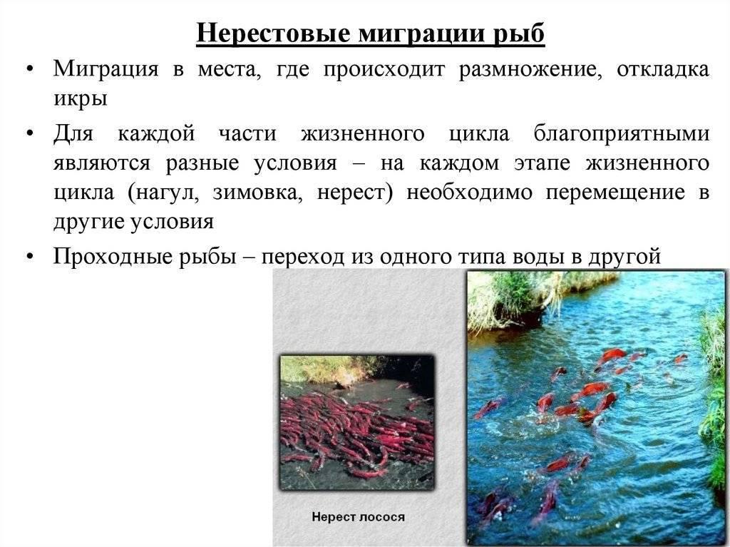 Стимуляция нереста аквариумных рыб — основные рецепты