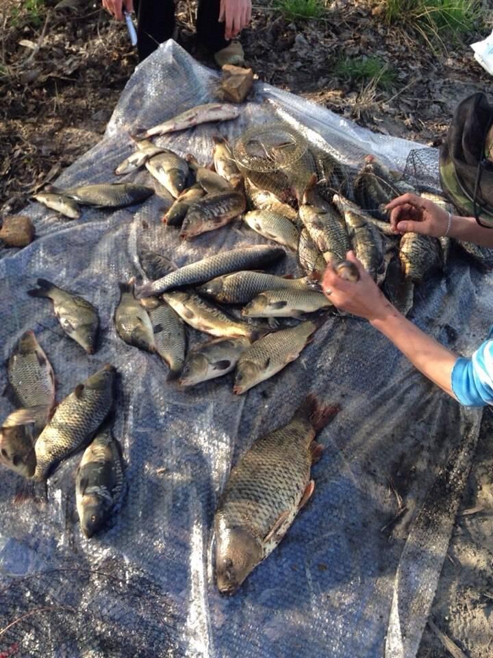 Рыбалка в егорьевском рыбхозе, в егорьевске 2020