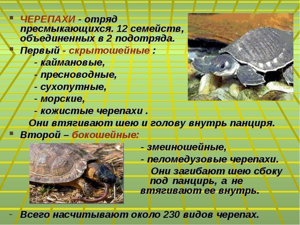 Как определить возраст черепахи - other