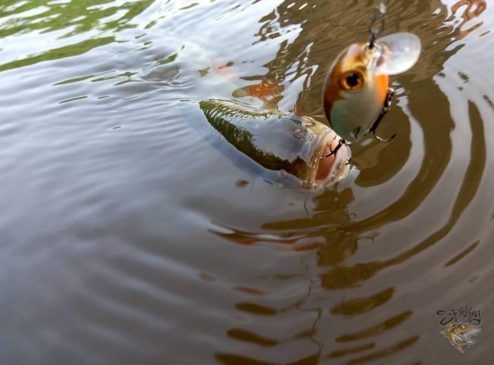 Почему паводок хорошо подходит для рыбалки? на что ловить и правильный выбор снасти
